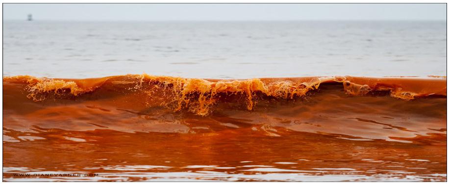 Joonis 2. Fütoplanktoni  massvohamine (Foto: www.dianevarner.com)