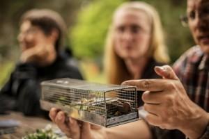 Metallist eluspüügilõksu kasetriibik naljalt ei roni. Küll aga võib sinna pugeda näiteks Eesti kõige pisem kiskja - nirk. Autor: Mattias Veeremets.