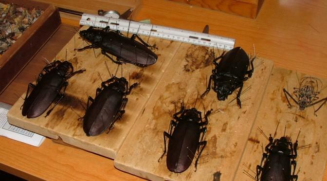 Prantsuse Guajaanas putukaid püüdmas
