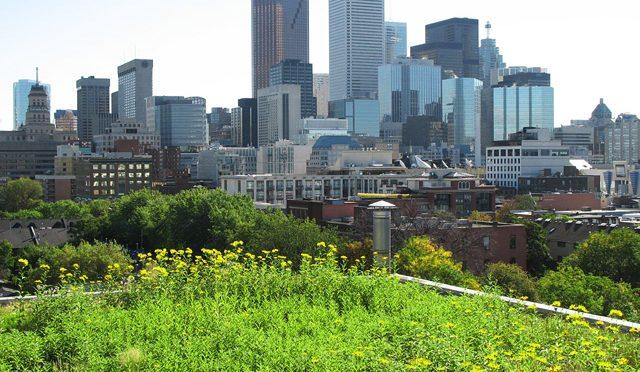 Mis kasu on rohelisest katusest?